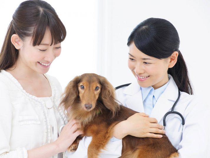 動物病院に入院したペットはどう過ごすの?ペットの入院Q&A