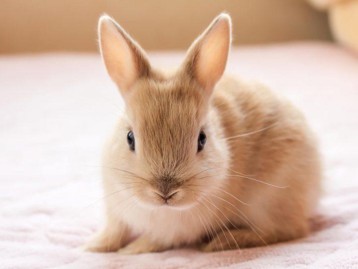ハムスターやウサギ…小動物を診察してくれる動物病院特集