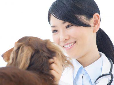 獣医・動物看護師になりたい!動物病院で働く方法