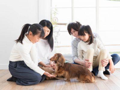 譲渡会や里親募集など!犬を引き取る方法と必要な心構え